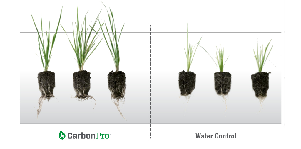 CarbonPro-_Chart-2-Roots.jpg